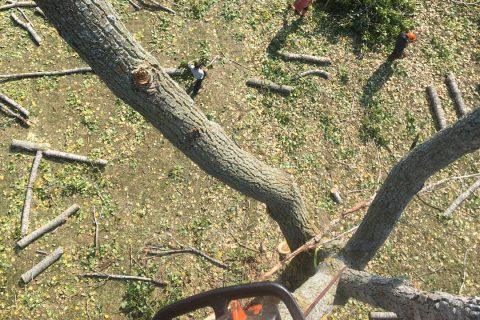 Services DDG émondage arbre Laurentides