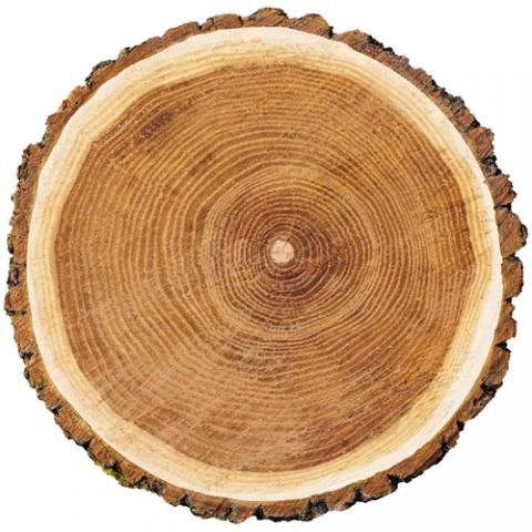 Couper arbre Services DDG